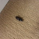 Bugs all over the Hall, never cleaned up!