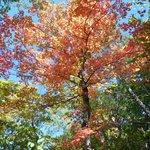 Fall Foliage is beautiful
