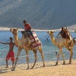 ragazzi e cammelli