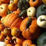 Oodles of Pumpkin