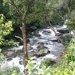 The Stream Next to the Resort