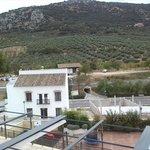 Vistas a los olivos de la zona