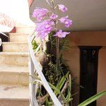 Orchid Silvestre