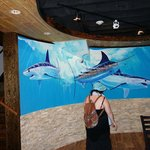 Paintings cover the walls at Guy Harvey's