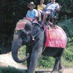 Hungry Elephant but no Bananas Left