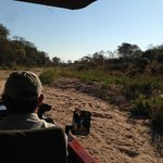 During Game Drive