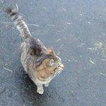 Super friendly stable cat