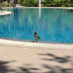 Un martin triste se rafraichit à la piscine