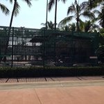 Tiger Cage in middle of resort