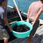 Можно попробовать свежих морских ежей