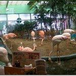 Photo of Mexico Iwaki flamingo