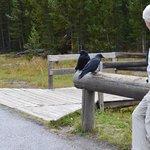 Nice Man and Ravens