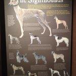 Greyhound Hall of Fame Foto