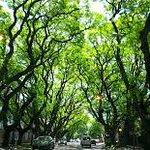beautiful trees in San Isidro