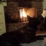Dante relaxing by the fire in the Sea Star room.