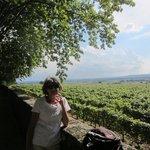 Chateauneuf du Pape vines