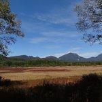 小田代ヶ原に広がる赤い帯