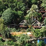 Bungalows high into the trees