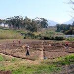Communal produce garden