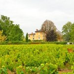 chateau from the vineyard