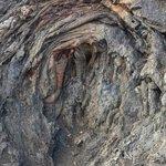 O encontro da lava com uma grande árvore.