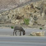 Donkey over the road from the hotel