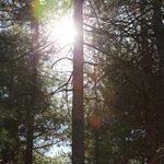Photo de Camping Monte-Cinto