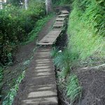 Cape Lookout Trail - Steps along the trail