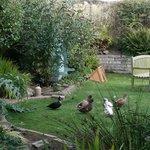 Ducks enjoying the park-like backyard