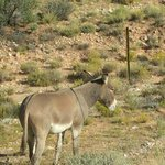 lone burro across the road from other two