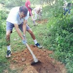 Forestation work