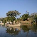 Elephant on banks of Zambesi