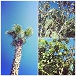 деревья на территории отеля
