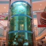 Fish tank when you enter
