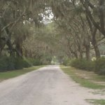 One of the many roads used to explore Bonaventure Cemetary.