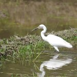 Egret, seen from room