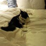Sweetie the resident cat