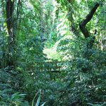 Carambola botanical garden