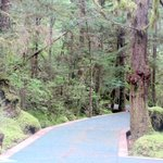 Nice Walk Way Through The Rain Forest at Silver King Lodge, Ketchikan, Alaska