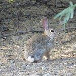 Bunny on Wash Hike