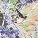 Vlinder/mot in de tuin