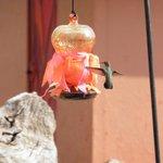 Er vliegen allemaal kolibri's