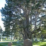 Photo de Ross Bay Cemetery