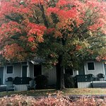 Beautiful fall color in front of room