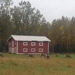 Caribou Crossing Cabins local visitors!