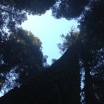 looking up from our campsite