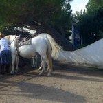 De magnifiques chevaux soignés par Elise !