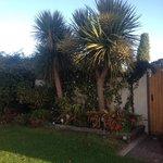 palm trees in Dublin!