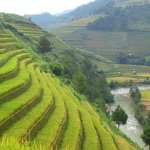 Terraced paddy fields everywhere