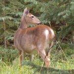 Wildlife in Whistler Mountain RV campground